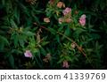 花卉植物,香味,牆紙 41339769