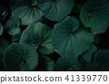 夏日的天空,深灰色的葉子,大塊的葉子,熱量 41339770