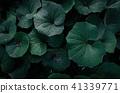 夏日的天空,深灰色的葉子,大塊的葉子,熱量 41339771