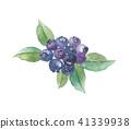 藍莓 莓 水果 41339938