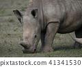 白犀牛 41341530