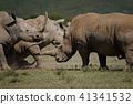 白犀牛 41341532