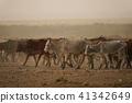 奶牛 牲畜 家畜 41342649