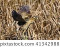 조류, 새, 들새 41342988