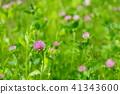꽃, 플라워, 야생화 41343600