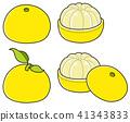 柚子 文旦 水果 41343833