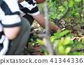 벌레, 곤충, 소년 41344336