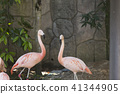 flamingo, flamingoes, flamingos 41344905