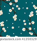 Plum Blossom Flower on Indigo Blue Background 41350329