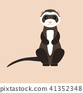 Gray ferret in full growth sits. Vector flat design illustration. 41352348