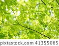 느티 나무의 숲의 음이온 1 41355065