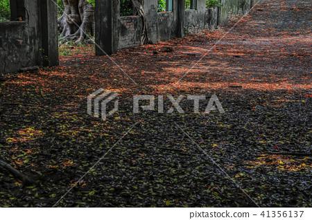 廢墟鳳凰花紅毯 41356137