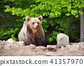 animal, bear, cub 41357970