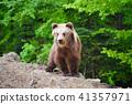 animal, bear, cub 41357971