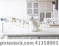 和猫一起生活 41358903