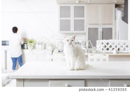 和猫一起生活 41359393