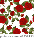 Red Rose on White Background 41359433