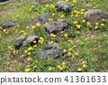 Wulingguo, Hokkaido, Japan - yellow and white flowers everywhere 41361633