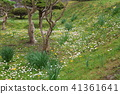 Wulingguo, Hokkaido, Japan - yellow and white flowers everywhere 41361641