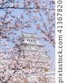 Sakura trees cherry blossom around Himeji castle 41367820