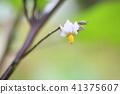 가지 꽃 41375607