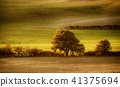 Tuscan fields and trees 41375694