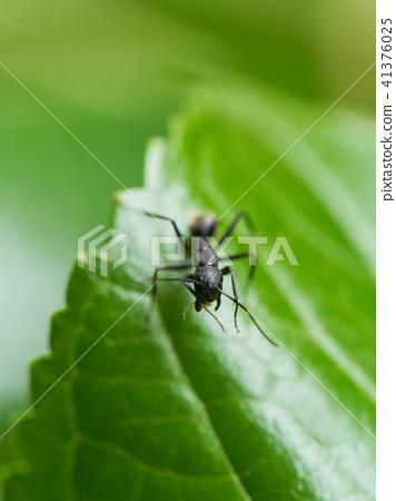 개미의 얼굴 41376025