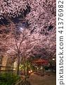 기온 시조 벤 자이 텐 부근의 벚꽃 41376982