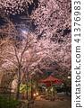 기온 시조 벤 자이 텐 부근의 벚꽃 41376983