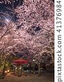 기온 시조 벤 자이 텐 부근의 벚꽃 41376984