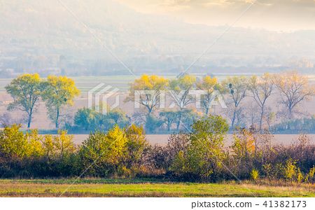 trees along the rural fields in morning haze 41382173