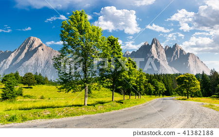 row of trees along the road in to the mountains 41382188