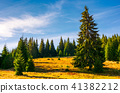 grassy glade among the spruce forest in autumn 41382212