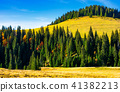 spruce forest around the hill in autumn 41382213