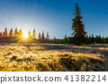 sunrise in the forests of Apuseni Natural Park 41382214