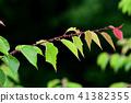 비오는 날의 벚꽃 잎 41382355