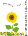 sunflower sunflowers summer 41382665