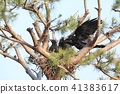 烏鴉的巢 41383617