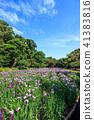 꽃창포, 붓꽃, 식물 41383816