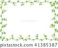 荷兰豆 植物 植物学 41385387