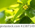 牡蛎的花以绿色 41387149