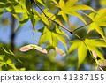 autumn leaves, autumnal tints, vegetation 41387155