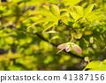 autumn leaves, autumnal tints, vegetation 41387156