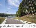 cedar forest, japanese cedar, japanese cedar forest 41387170