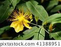 ดอกไม้,ฤดูร้อน,หน้าร้อน 41388951