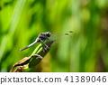 แมง,แมลงปอ,แมลง 41389046