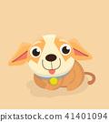 Chihuahua dog. 41401094