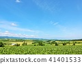 홋카이도 상쾌한 푸른 하늘과 비 에이의 대지 41401533