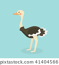 Cute Ostrich in flat style isolated. 41404566