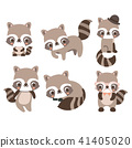 Collection isolated funny raccoon. 41405020